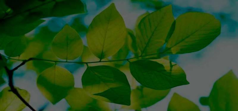 Laudo técnico de supressão de vegetação
