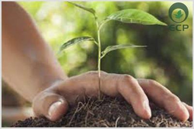 Consultoria ambiental eia rima