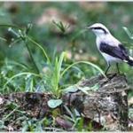 Laudo de caracterização de fauna e flora