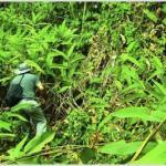 Laudo de caracterização de vegetação